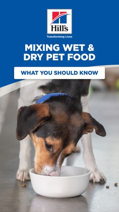 Using wet cat food to top dry kibble is popular among pet parents but it may not be a great idea if your pet needs a specific diet Heres what to look for when considering mixing a wet food and dry food together. - Cat Food - Ideas of Cat Food Best Dog Food, Dry Dog Food, Cat Food, Cute Dogs And Puppies, Pet Dogs, Doggies, Dog Breeds Little, Dog Grooming Business, Grooming Shop