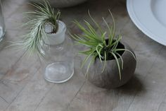 not floral but air plants!
