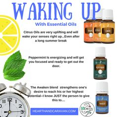 Back to School time is my favorite time to talk about essential oils! We use them all year long, but it's really personal this time of year because back to school time is when I decided to take the. Thieves Essential Oil, Essential Oil Blends, Young Living Lemon, Citrus Oil, Diffuser Jewelry, Copaiba, Body Systems, Young Living Essential Oils, Hearth