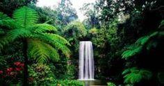 Millaa Millaa Falls, Atherton Tablelands, Cairns