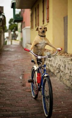 Chien cycliste