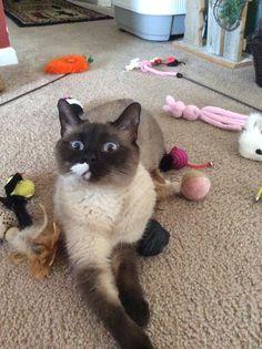 Bridget says what do you mean, no more toys!