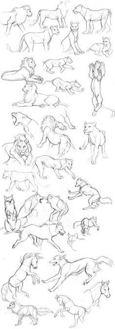 New Animation Art Sketches Pose Reference 70 Ideas Drawing Poses, Cat Drawing, Drawing Sketches, Drawing Tips, Sketching, Drawing Ideas, Animal Sketches, Animal Drawings, Drawing Animals