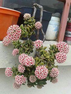 . - Succulent Gardening