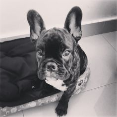 Dexter 4 meses!!!