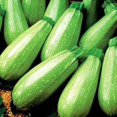 Squash Magda Hybrid in The Big Seed Book from Park Seed on shop.CatalogSpree.com, my personal digital mall.
