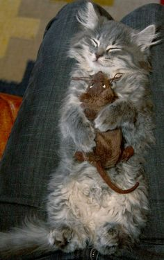 I'm not sure what's cuter ... the contented expression, the clutching of a stuffed rat, or the fact that someone stayed still to allow the cat to sleep (and was still able to photograph it).