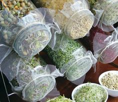 Try growing your own sprouts. All you need are some seeds, a large, clean jar and some netted fabric secured with a band. Soak seeds that have been thoroughly rinsed for the first 24 hours in clean cool water, draining and refreshing the water several times. Store in the dark. Then rinse twice a day with fresh clean water and set in sunlight. Your sprouts will be ready to eat in a week!