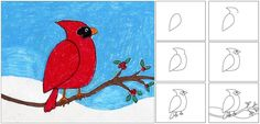 Draw a Cardinal. A simple version that works for elementary students. PDF tutorial available. #howtodraw #cardinal #directdraw