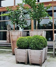 Four Vasari planters with a row of Neumeister planters in the background.