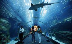 Aquario de Sao Paulo - E um oceanario localizado no distrito do Ipiranga, zona sudoeste da cidade de Sao Paulo - Pesquisa Google