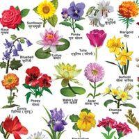 Pin On Flower Views