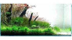 LÁSZLÓ SIMON. For info about this aquascape and to give it a rating: click the link in our profile.