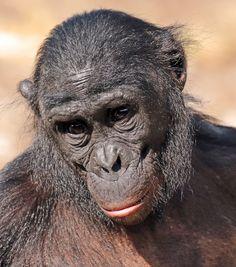 bonobo planckendaell JN6A8217