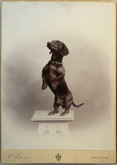 Fotografie psa vystavená v Lobkowiczkém palác v Praze.