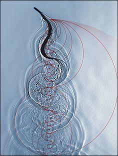 Prime Number Patterns by Jason Davies  http://www.jasondavies.com/  swimming snake http://www.pinterest.com/pin/319826011009769855/