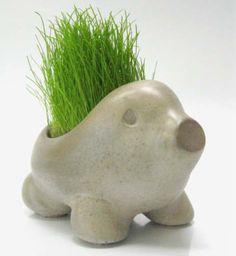 Verdespin es una simpática maceta que llego para enamorarte y acompañarte, viene con semillas de césped y tierra, listo para plantar. Cuando recibas a verdespin, poné la tierra, hechá las semillas, regalo y colocalo en algun lugar que reciba luz solar. En dos semanas verás sus pelos crecer y podrás empezar a cuidarlo. También podes plantarle ciboulette, perejil u otras plantas aromáticas y ponerlo en tu cocina. Un amiguito para tu mascota, ponele hierba para tus gatitos.