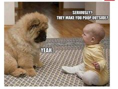 10 Funniest Dog Pictures Ever Taken animals adorable dog animal pets puppies funny animals heartwarming funny dogs Funny Dogs, Funny Animals, Cute Animals, Baby Animals, Animal Babies, Panda Dog, Dog Cat, Pet Cats, Cute Fluffy Dogs