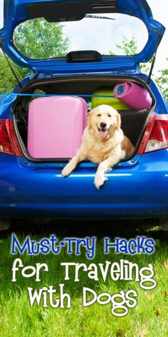 Planning to hit the road with your dog by your side? Whether you're just headed…