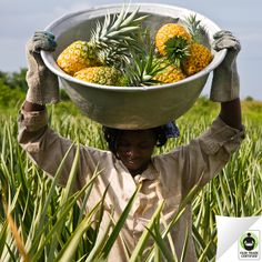 Fair Trade Certified pineapples are better for people and the planet. Choose pineapples with a purpose - choose #FairTrade #environment