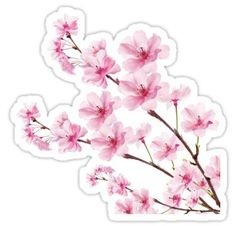 'Sakura Cherry Blossom' Sticker by <br> Light-hearted Japanese cherry blossom tree branch design. Stickers Cool, Bubble Stickers, Anime Stickers, Kawaii Stickers, Printable Stickers, Laptop Stickers, Journal Stickers, Planner Stickers, Sakura Cherry Blossom