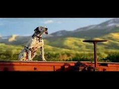 Budweiser Clydesdale Team Commercial - Rocky Theme