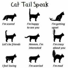 Good to know when introducing dogs and cats