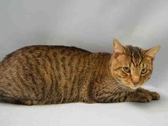 FINNIGAN - A1052639 - - Brooklyn   ***TO BE DESTROYED 10/08/15*** FINNIGANS ' age seems to be a hard subject to tackle since he's listed as 2 and 4 years old. But as far as FINNIGAN is concerned, he might as well be 4 since he's had to grow up quick after being placed in the ACC because his owner died. He's scared in the shelter,though he did allow brief petting but backed away from any further interaction. PLEASE, offer to FOSTER or ADOPT this ADORA
