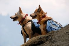 Emergency Preparedness for your Pets.