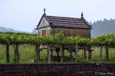 ES_160614 Espanja_0163 Hórreo ja köynnösviiniä Galician Briallosissa