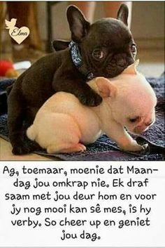 Afrikaanse Quotes, Goeie More, Special Quotes, Inspirational Quotes, Motivational, Good Morning, Cheer, Prayers, Day