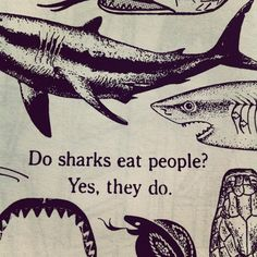 Do sharks eat people?  Yes, they do.  #lovehaterelationshipwiththeocean