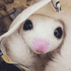 Share this Baby white glider, in a bag Animated GIF with everyone. Cute Funny Animals, Cute Baby Animals, Animals And Pets, Small Animals, Sugar Bears, Sugar Gliders, Little Critter, Cute Little Things, Cute Kittens