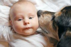Aileye yeni bir bebek katılması herkesi heyecanlandırır, fakat bazı köpekler onlara verdiğimiz sevgiyi paylaşmaktan hoşlanmayabilir...
