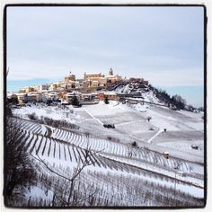 Langhe vineyards in the snow