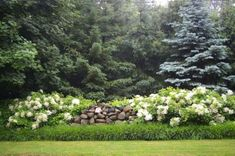 Field stone fence with grass & climbing hydrangea. Rustic and beautiful!