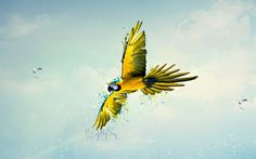 Born to fly yellow parrot - Wallpaper | GFXHive