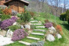 vue bonne combinaison entre couleurs plantes pierre rocher