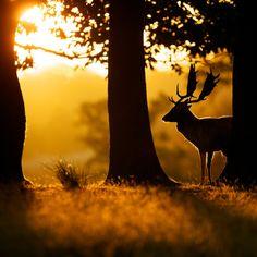 """""""dawn"""" by Mark Bridger, via 500px."""