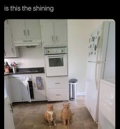 Top 32 Funny Animal Memes Of The Day