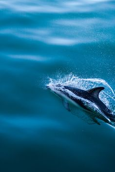 midnxght: Dolphin by Monday's Socks on Flickr.