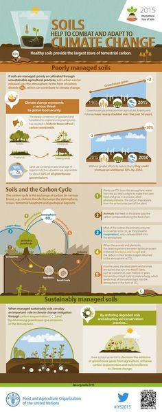 Healthy soils provide the largest store of terrestrial carbon. When managed sustainably, soils can play an important role in climate change mitigation by storing carbon (carbon sequestration) and decreasing greenhouse gas emissions in the atmosphere.