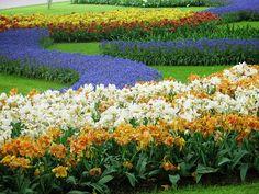 Keukenhof flower gardens