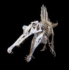 Spinosaurus--These dinosaurs were possibly the largest of all carnivorous dinos, even larger than T-rex Dinosaur Skeleton, Dinosaur Art, Dinosaur Fossils, Prehistoric Dinosaurs, Prehistoric Creatures, Spinosaurus Aegyptiacus, Jurassic Park World, Extinct Animals, Vertebrates