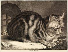 """Cat Sleeping"" or ""The Large Cat"" 1657 engraving. Cornelis de Visscher | by Plum leaves"