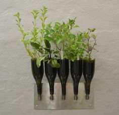 Upcycled wine bottles make a graceful vertical herb garden.