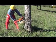 A safer way to fall a tree. - YouTube