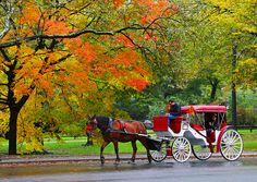Horse carriage ride in Central Park