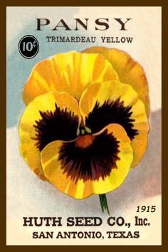 Pansy seed packet 1905 in a set of 4-4x6 quilt blocks produced by American Quilt…