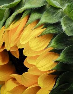 Yellow flowers and Orange flowers can bring cheer and brightness to your garden, wedding and Home. So, which beautiful flowers do you prefer? Small orange flower and yellow flower Happy Flowers, My Flower, Flower Art, Beautiful Flowers, Cactus Flower, Sunflowers And Daisies, Orange Flowers, Exotic Flowers, Yellow Roses